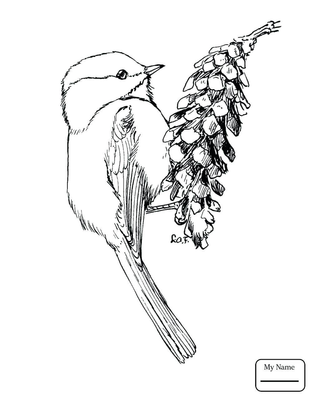 996x1277 Coloring Page Coloring Pages Birds Bird Of Paradise Colouring