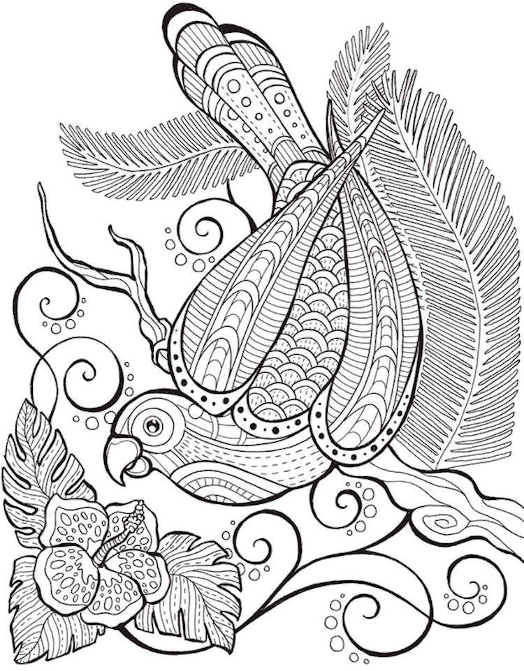 750x961 Bird Of Paradise Bird Coloring Pages