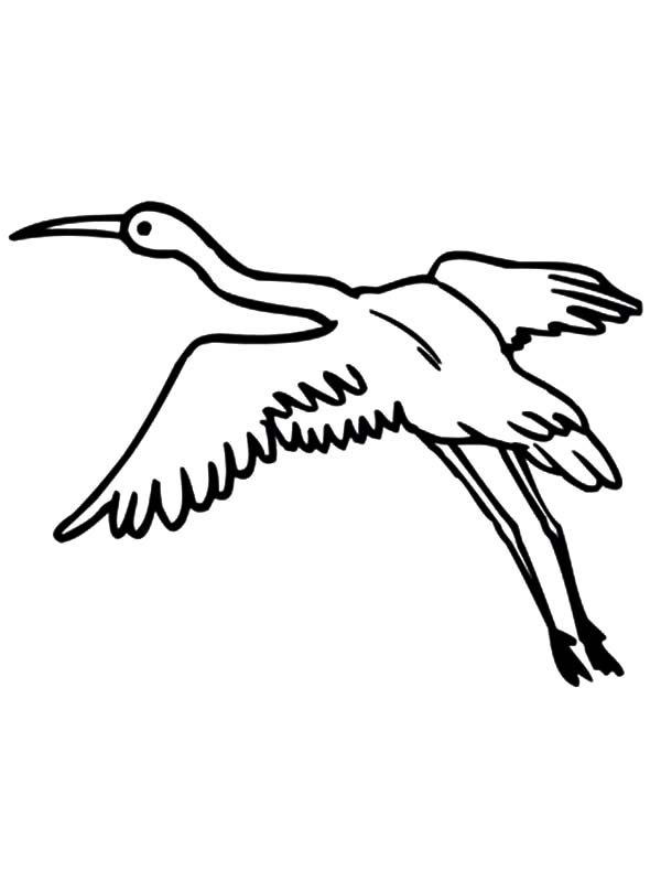 600x799 Crane Bird Netart