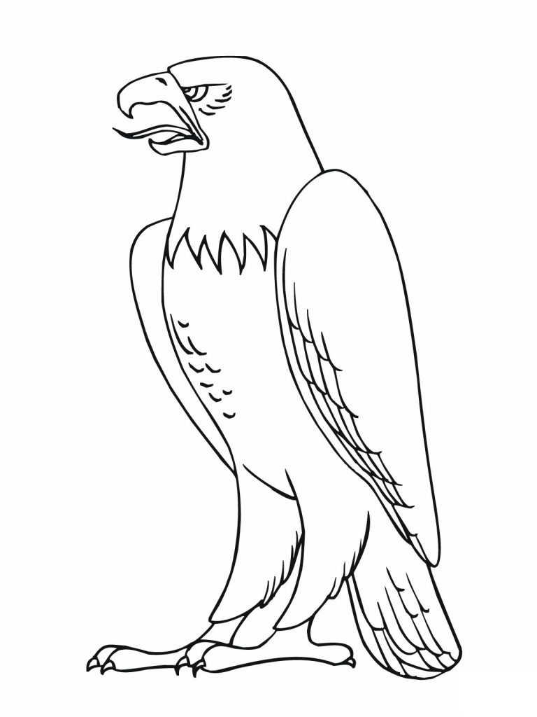 768x1024 Eagle Coloring Page Animal Pages In Birds Of Prey