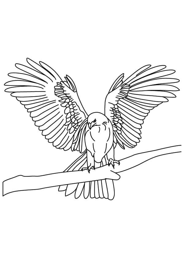 600x842 Falcon Bird Netart