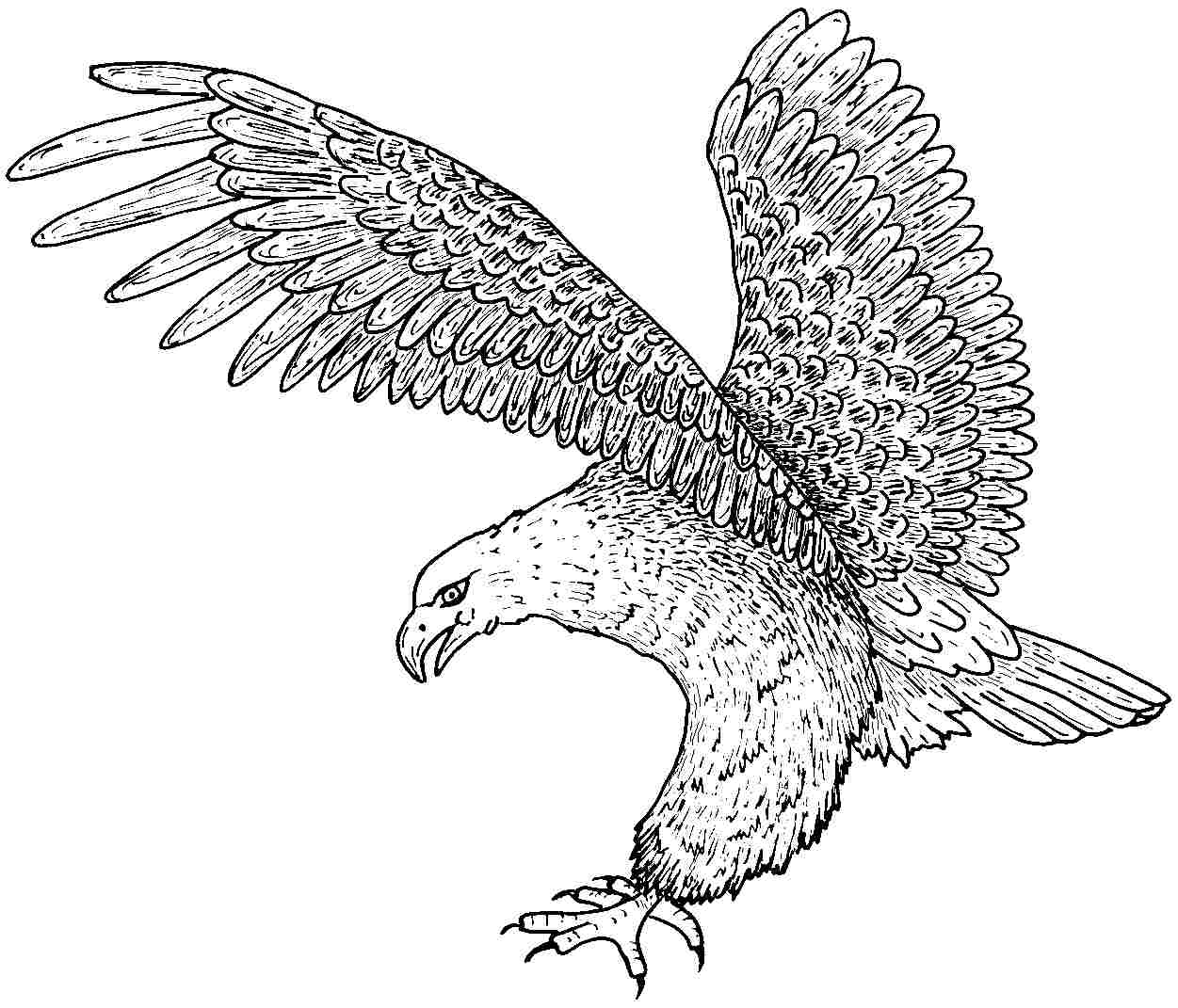 1251x1071 Free Printable Eagle Coloring Pages For Kids