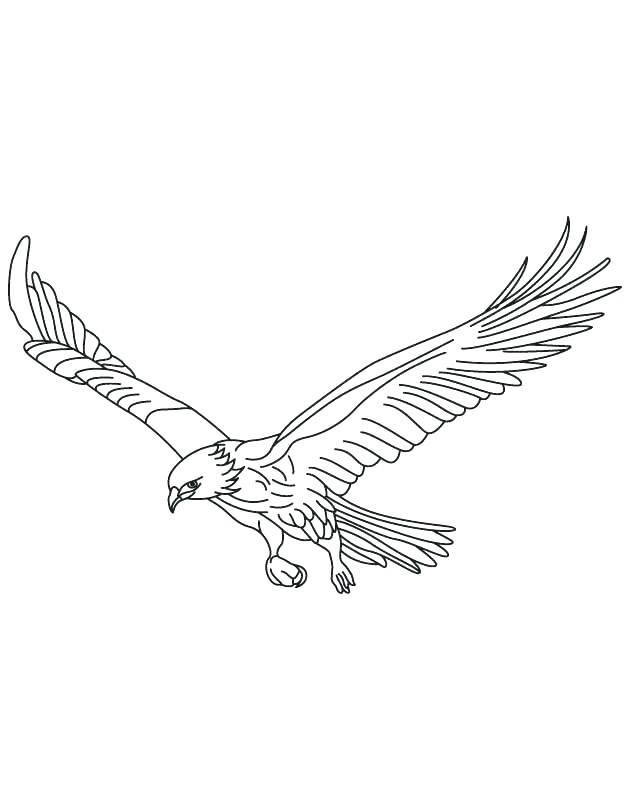 630x810 Hawk Coloring Pages Birds Of Prey Coloring Pages Hawk Coloring