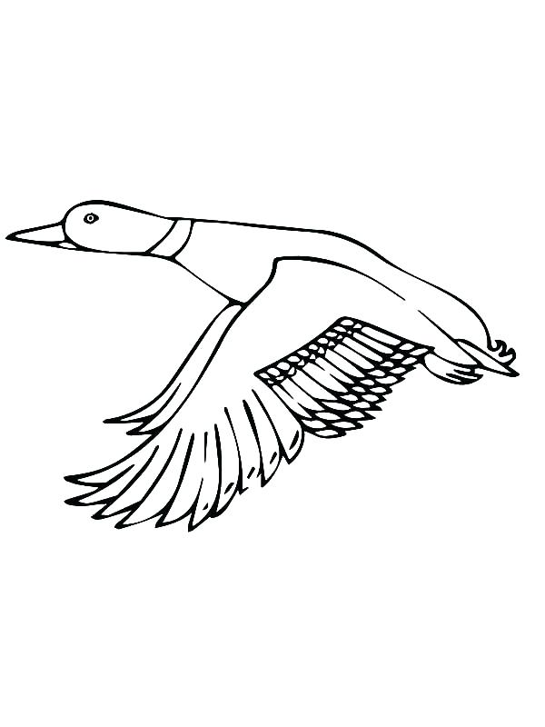 600x800 Super Wings Coloring Pages Plus Wing Coloring Pages Mallard Duck