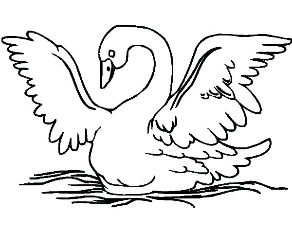 600x477 Swans Spread Her Wings Coloring Pages Batch Coloring