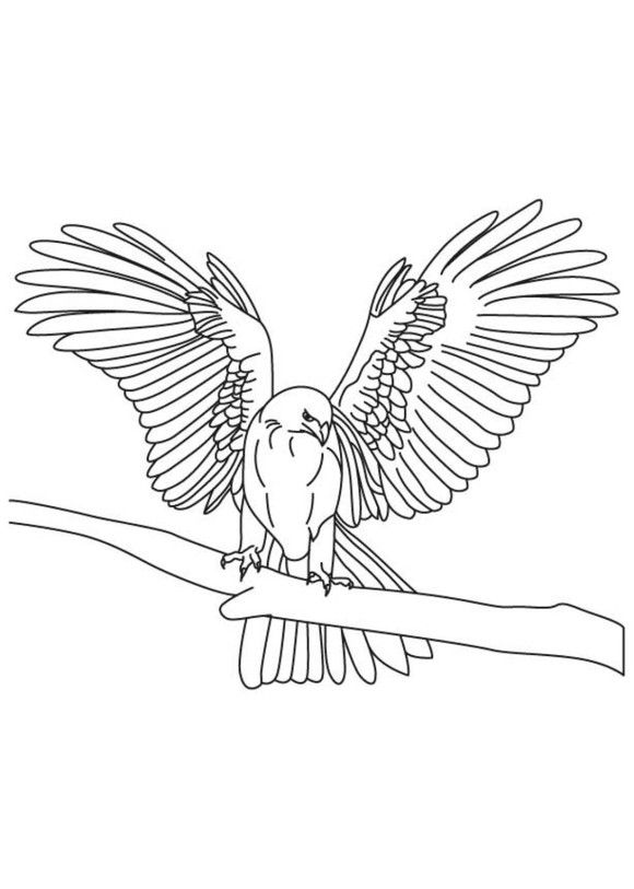 580x813 Tapered Wings Falcon Bird Coloring Pages Kleurplaat