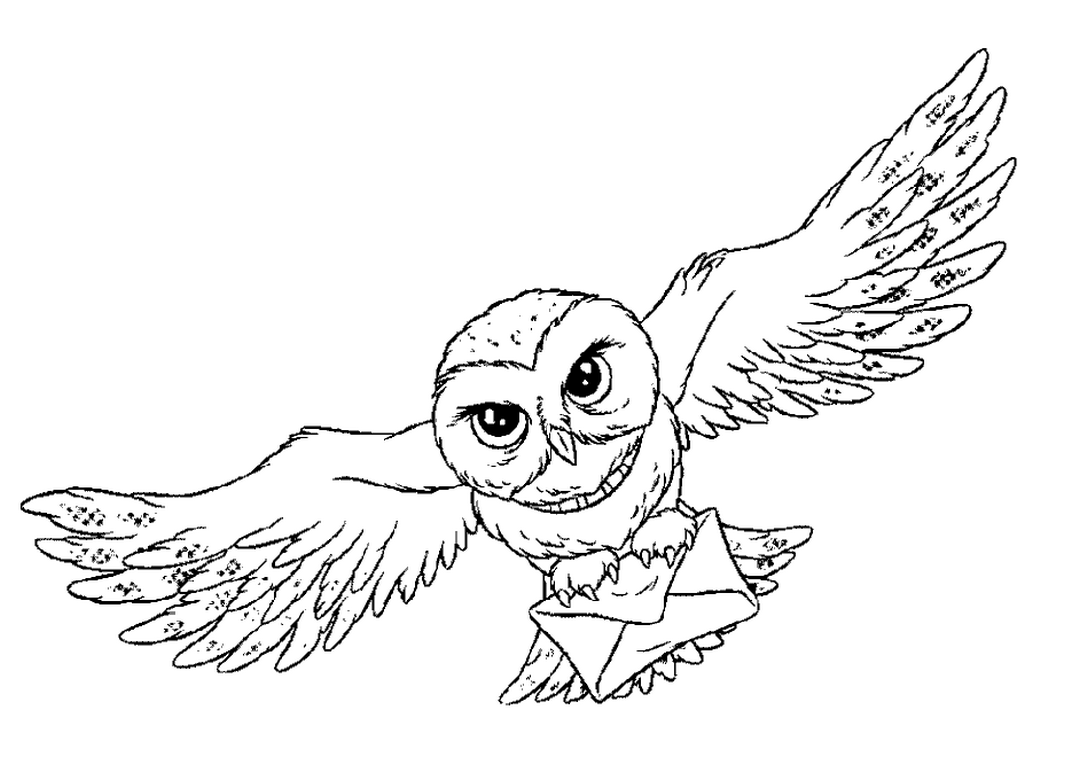 1080x765 Owl Animal Coloring Pages Bird That Flies
