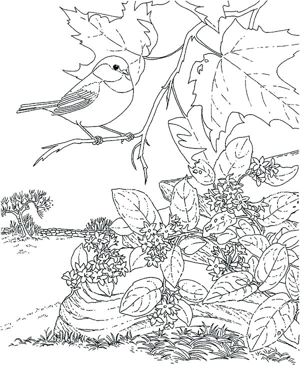 600x730 Birds Coloring Pages S Birdhouse Coloring Pages For Adults