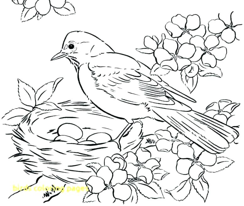 777x657 Coloring Page Of A Bird Incredible Ideas Coloring Pages Of Birds