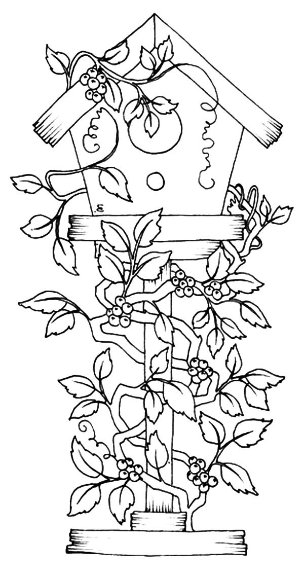 600x1136 Bird House Covered With Flowers Coloring Pages Best Place To Color