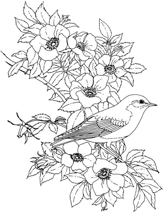 Birds And Flowers Coloring Pages