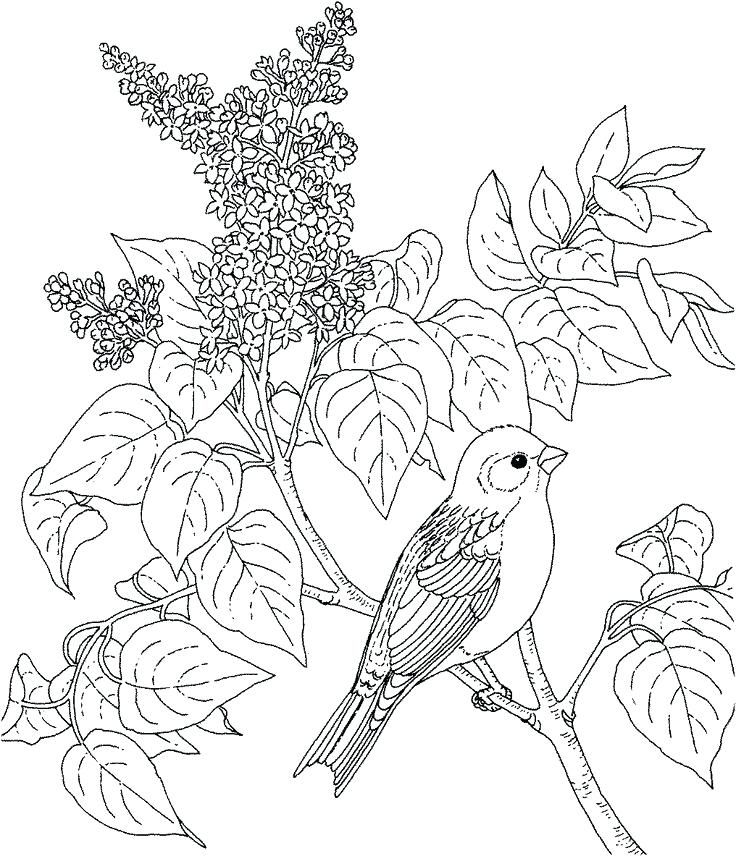 736x856 Coloring Pages Birds Flowers And Many Interesting