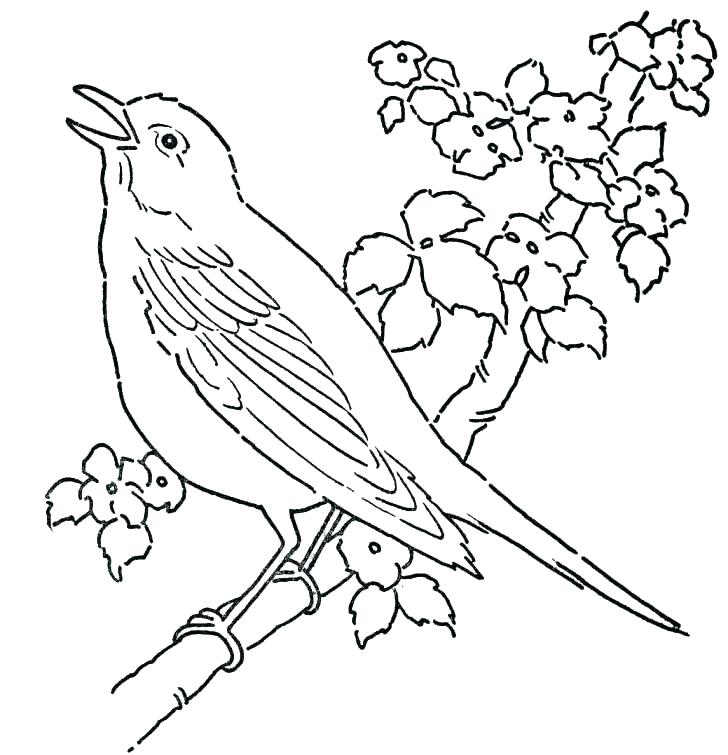 728x755 Coloring Pages Birds Free New Sheets Printable With Best Page
