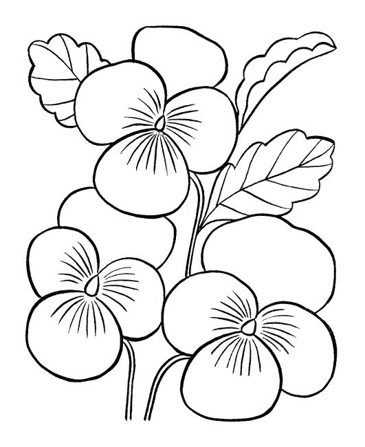 531x650 Easy Flower Coloring Pages These Free Printable Coloring Book