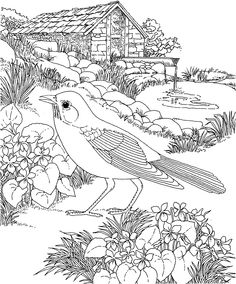 236x284 Free Printable Coloring Page State Birds And Flowers Coloring