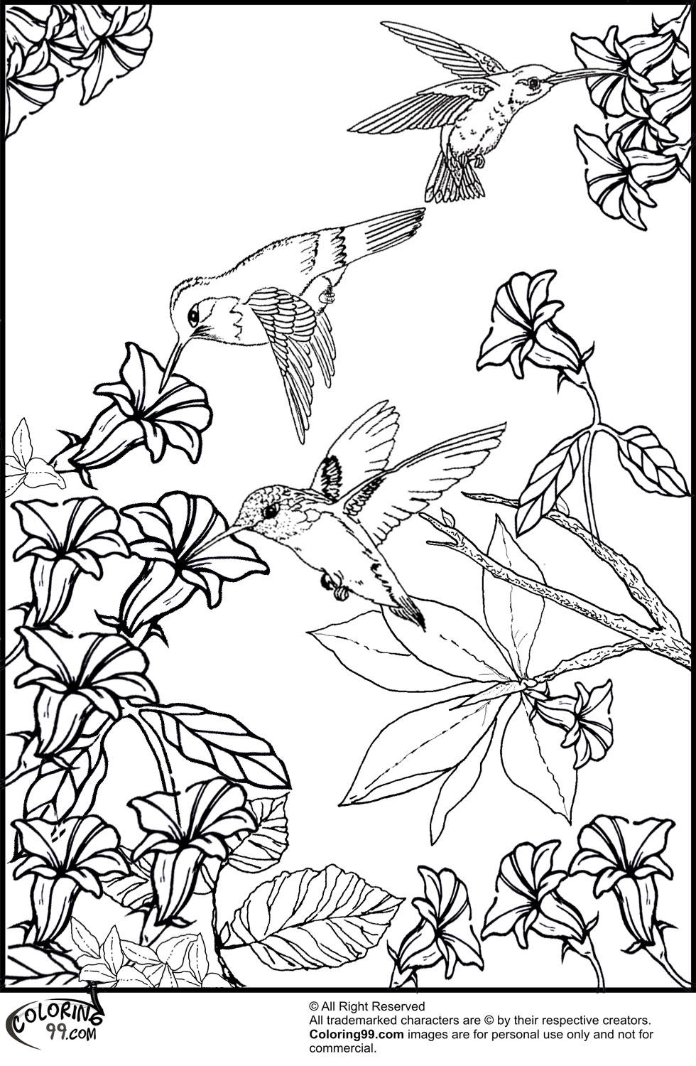 980x1500 Hummingbird Coloring Pages Team Colors