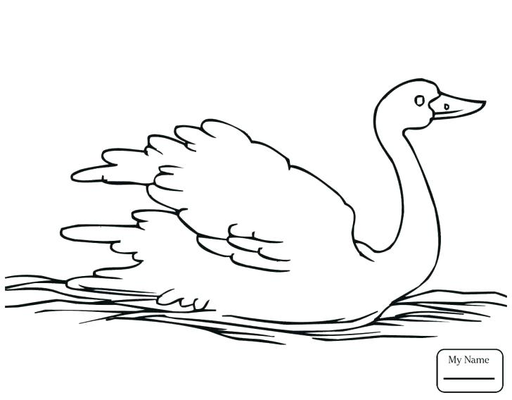 728x568 Pond Coloring Page Coloring Pages Flowers Baby Swan Birds For Kids