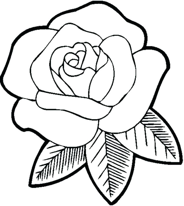 728x813 Realistic Flower Coloring Pages Coloring Pages Flowers And Birds