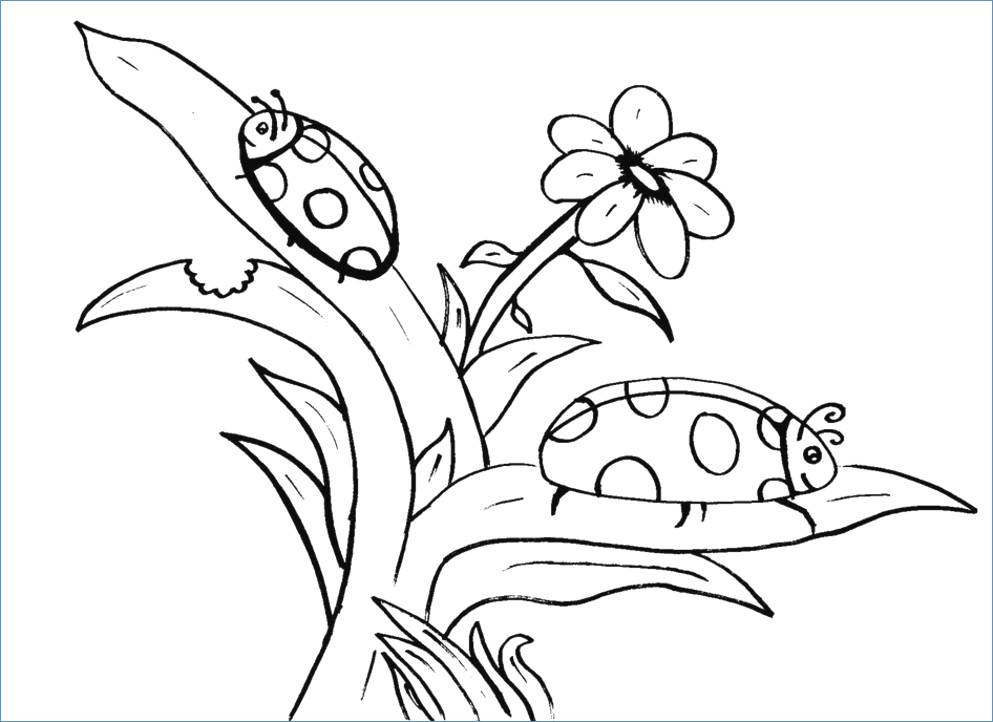 993x722 Simple Bird And Flower Coloring Page