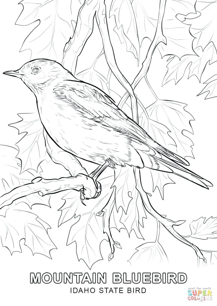 725x1024 State Bird Coloring Pages Happy State Bird Coloring Page Free