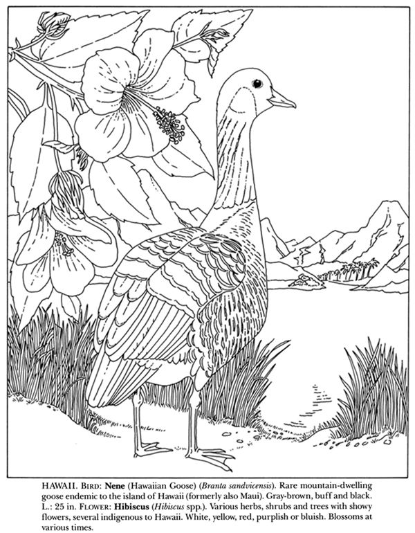 600x770 State Birds And Flowers Coloring Book Coloring Pages To Print