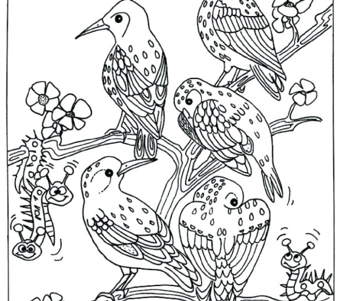 678x600 Coloring Pages Of Birds