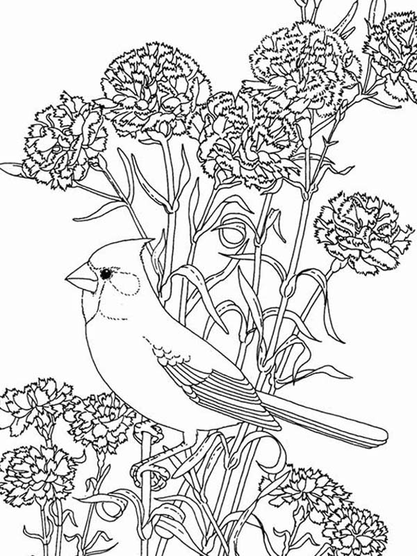 600x800 Bird Among Beautiful Flowers Coloring Page Color Luna
