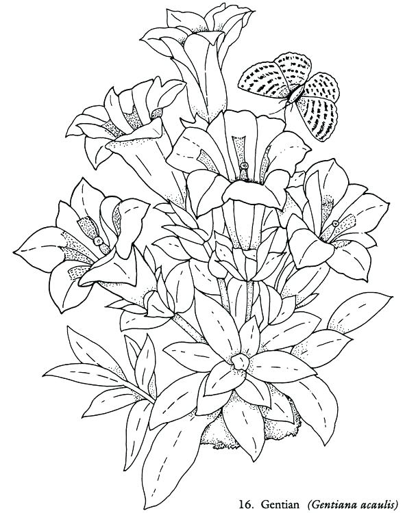 591x750 Coloring Page Of Flowers Best Coloring Page Flowers Cool Gallery