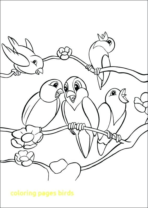 567x794 Coloring Pages Bird Coloring Pages Birds With Birds Coloring Pages