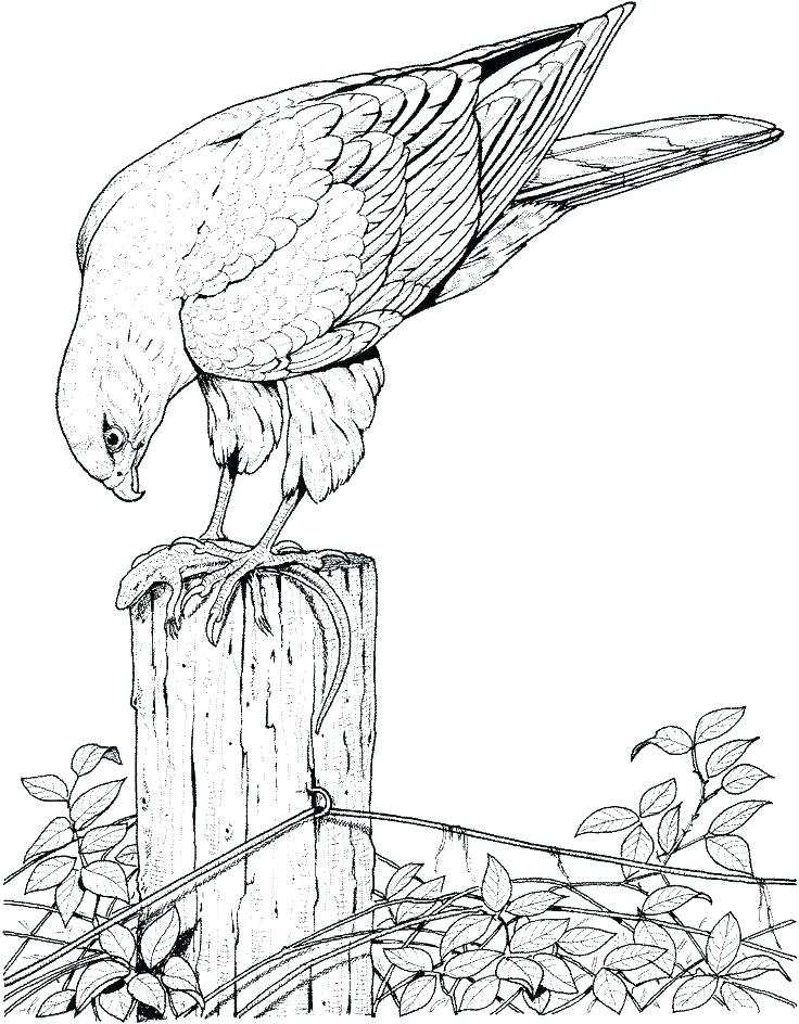 736x944 Coloring Pages Birds Of Prey Flying Bird Coloring Pages Flying
