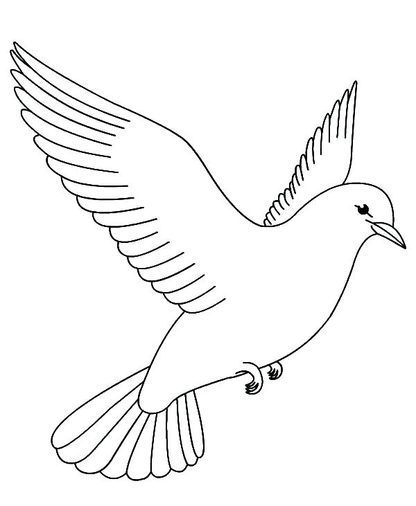 600x731 Coloring Pages Of Birds New Bird For Kids Printable Me Dove Page