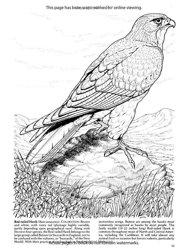 600x800 Best Birds Of Prey Activities Images On Coloring
