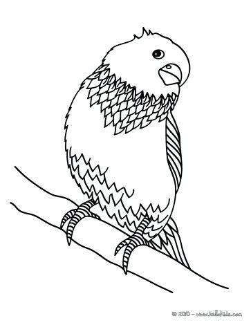 363x470 Coloring Pages Of Birds Parakeet Parakeet Coloring Page Coloring