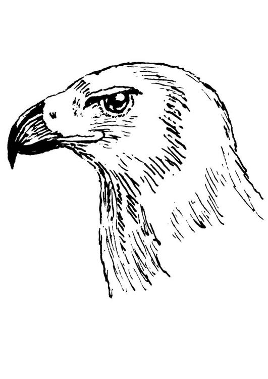 531x750 Coloring Page Bird Of Prey