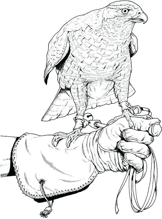 531x720 Free Coloring Pages Birds Coloring Pages Bird Coloring Pages