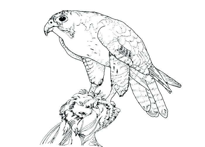 700x500 Free Coloring Pages Birds Coloring Pages Bird Cute Bird Coloring