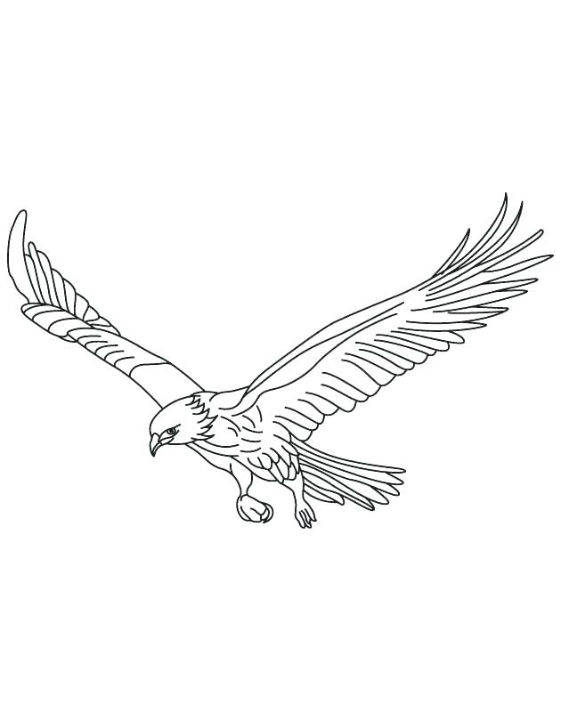 630x810 Hawk Coloring Pages Printable Coloring Pages