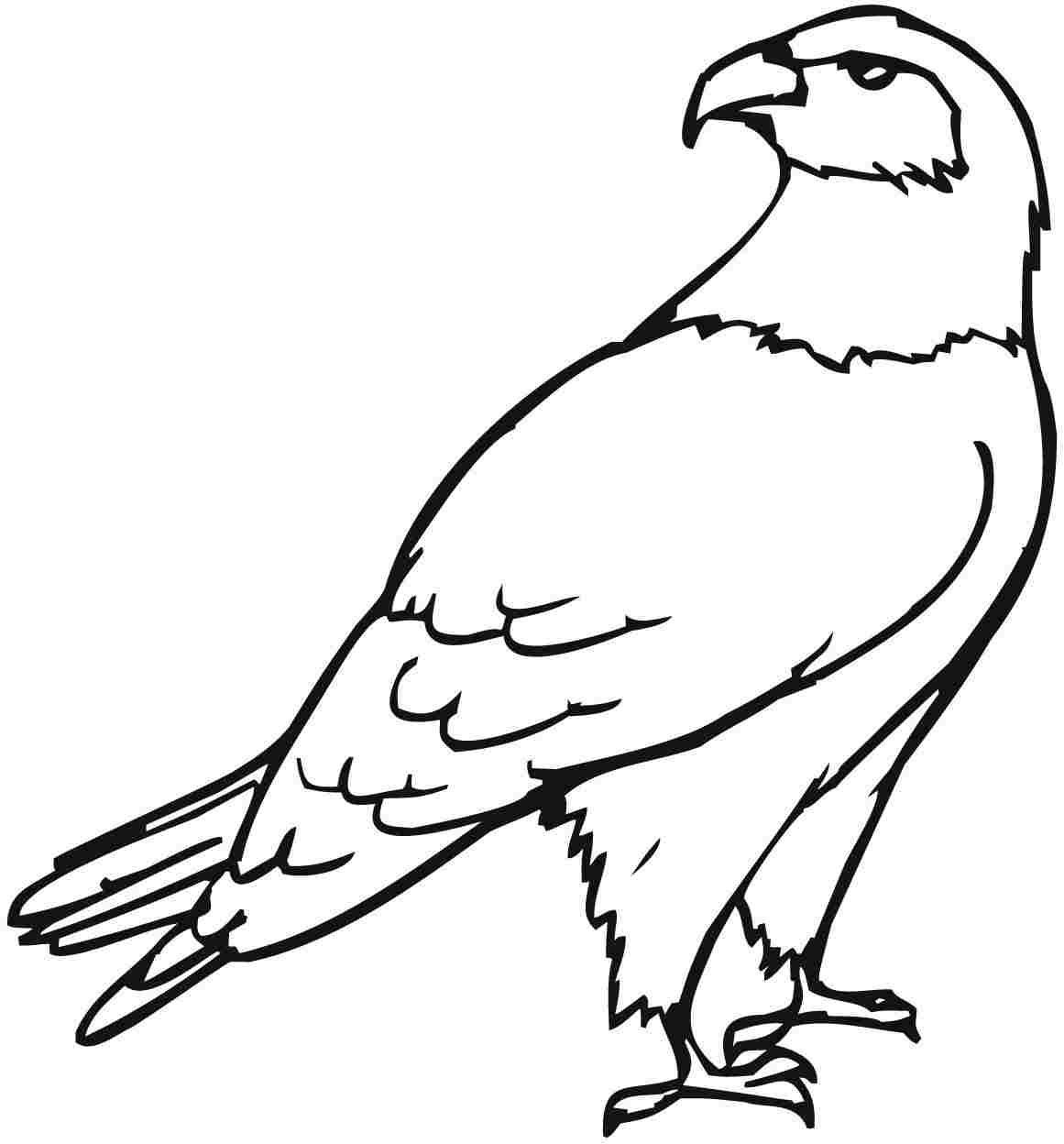 1161x1248 Quality Birds Of Prey Coloring Pages Free Eagle With Regard