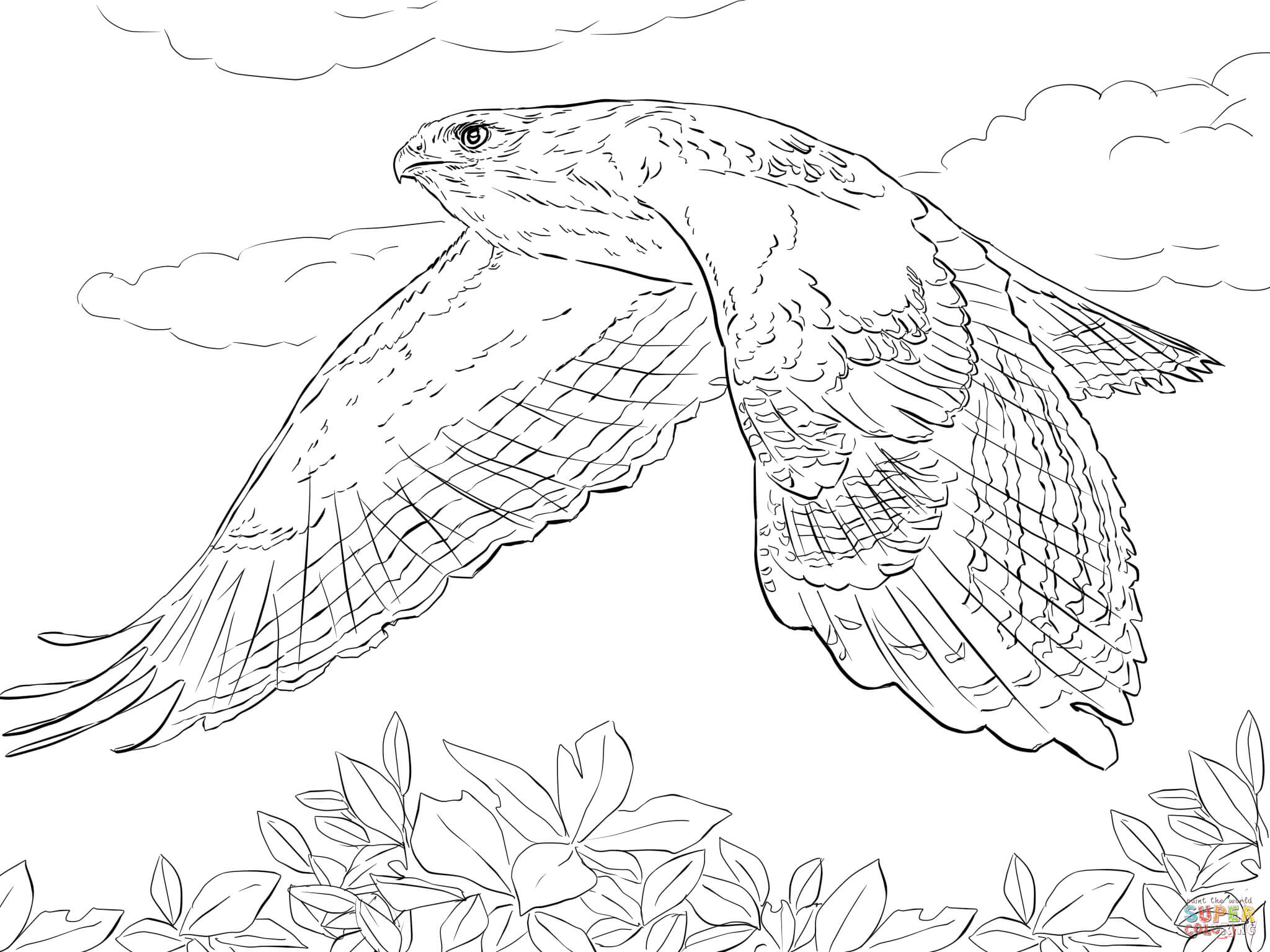 2048x1536 Red Tailed Hawk In Flight Coloring Page Free Printable With Pages