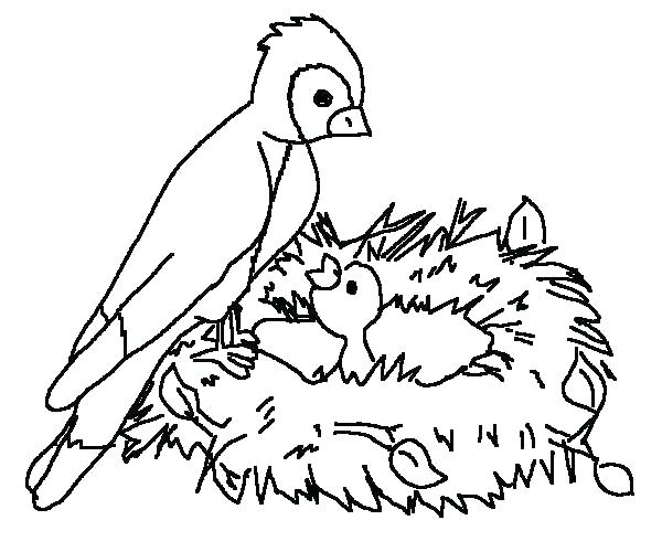 600x500 Robin Bird Coloring Pages Coloring Page Of A Bird Desert Birds