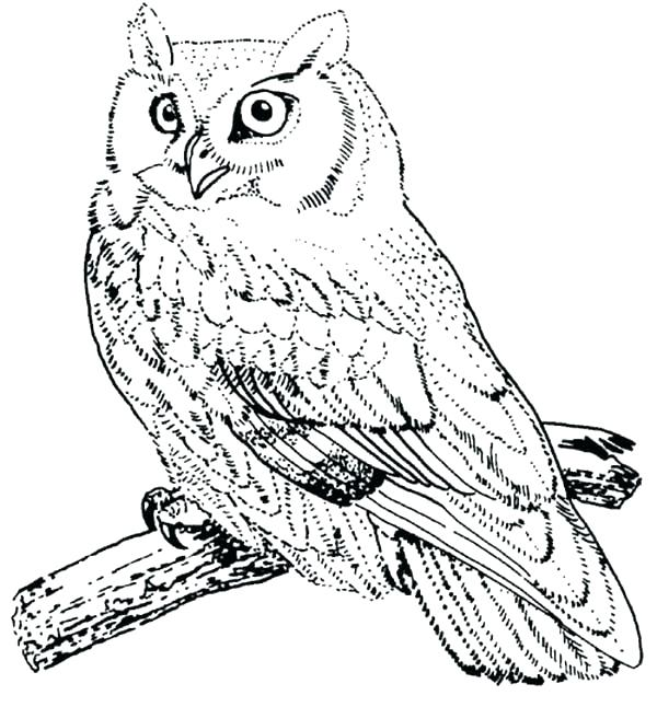 600x646 Birds Of Prey Coloring Pages Usedauto Club