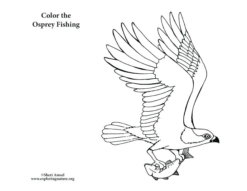 792x612 Coloring Chickadee Coloring Page Birds Of Prey Color Pages