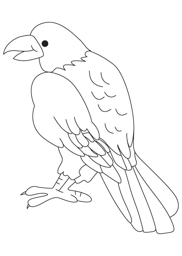 613x860 Birds Of Prey Coloring Pages Birds Of Prey Coloring Pages