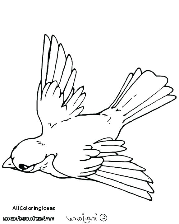 576x720 Birds Of Prey Coloring Pages Eagle Ng Pages Ng Page Of An Eagle