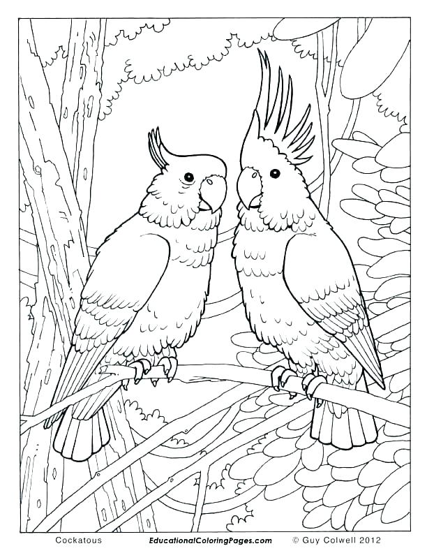 612x792 Birds Of Prey Printable Coloring Pages Easy Bird Coloring Pages