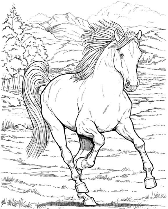 Black And White Horse Coloring Pages