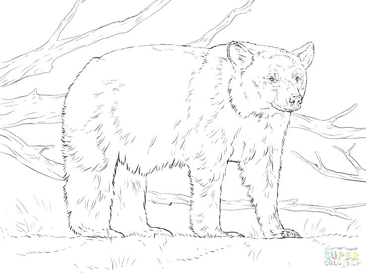 736x552 Black Bear Coloring Page Black Bear Coloring Page For Kids Within