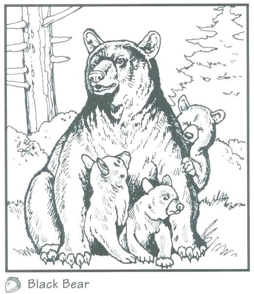 520x602 Black Bear Coloring Page Black Bear Coloring Pages Black Bear