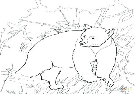 476x333 Black Bear Coloring Page Black Bear Coloring Pages Coloring Trend
