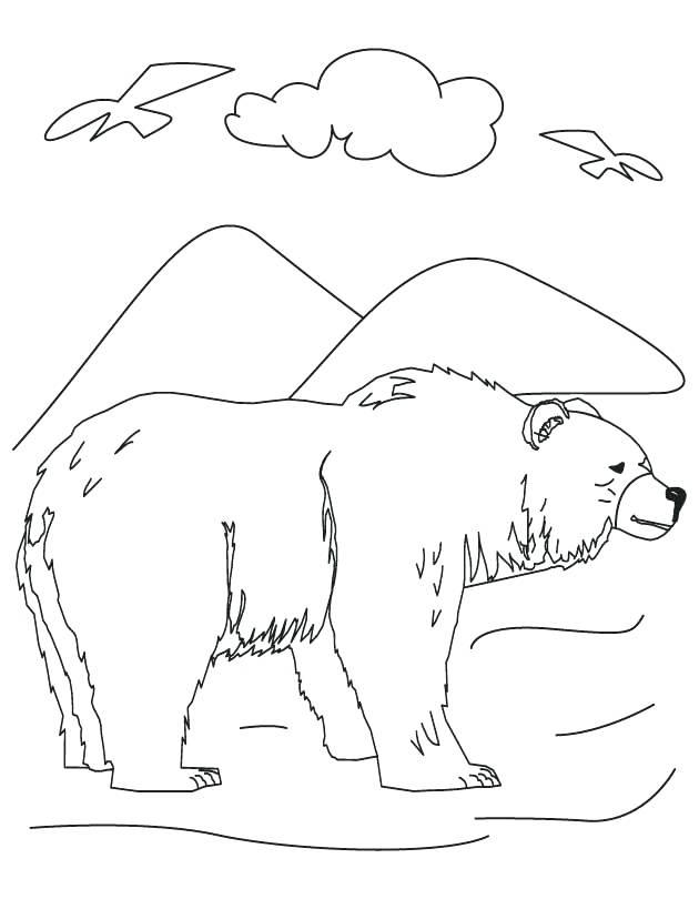 630x810 Black Bear Coloring Page State Mammal Black Bear Page Black Bear